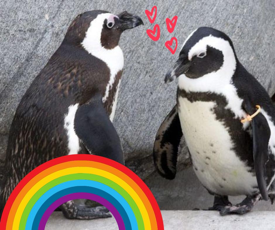 Kaksi pingviiniä kasvokkain, piirrettyjä sydämiä ja sateenkaari.